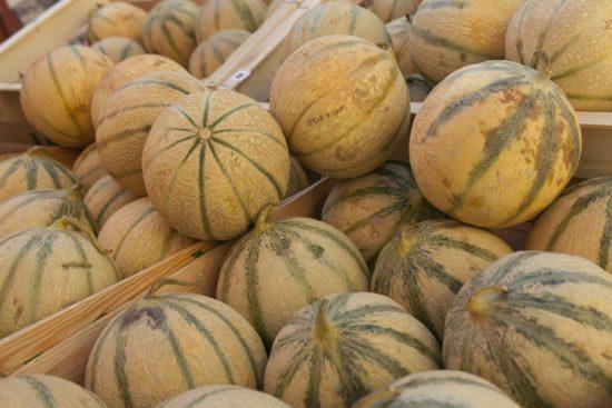 melons_sm